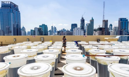 Barrels of spirulina on the rooftop of the Hotel Novotel Bangkok on Siam Square, Thailand. The spirulina is produced on the roof of the hotel in an urban farm run by EnerGaia, a Thai start-up company specializing in producing sustainable algae products.