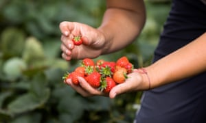 The pandemic has left farmers facing a severe shortage in seasonal workers on fruit farms across the country.