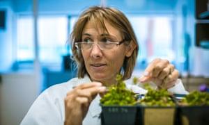 hope jahren in her lab