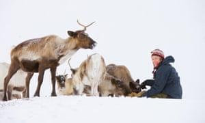 'The reindeer take everything in their stride' … Andi Probert.