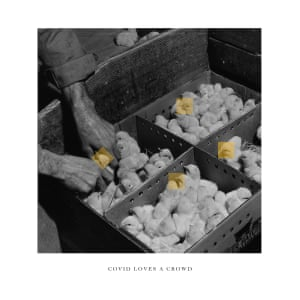 Four boxes with crowds of chicks in