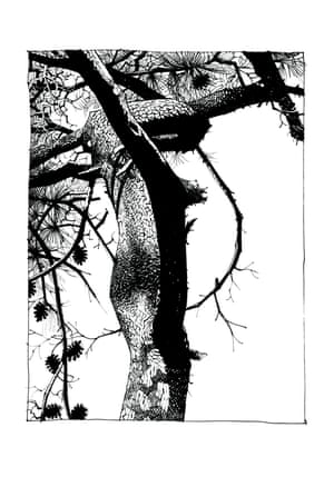 The Pines section features detailed illustrations of trees Hewlett observed while in the south of France.