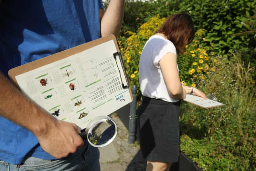 German conservation workers inspect an urban garden for insects.