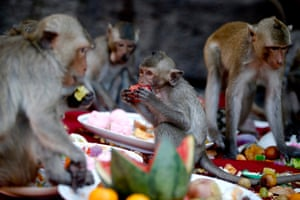 Monkeys enjoy a variety of fruits, vegetables and drinks during the monkey buffet festival at the Phra Prang Sam Yod temple in the city of Lopburi, Thailand