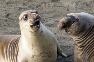 George Cathcart wins highly commended for his shocked seal in San Simeon, California