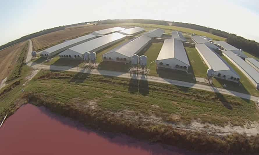 If pigs could fly: a factory pork farm in North Carolina.