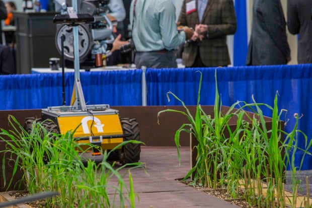 A Terra robot developed to help scientists breed fast-growing strains of sorghum.
