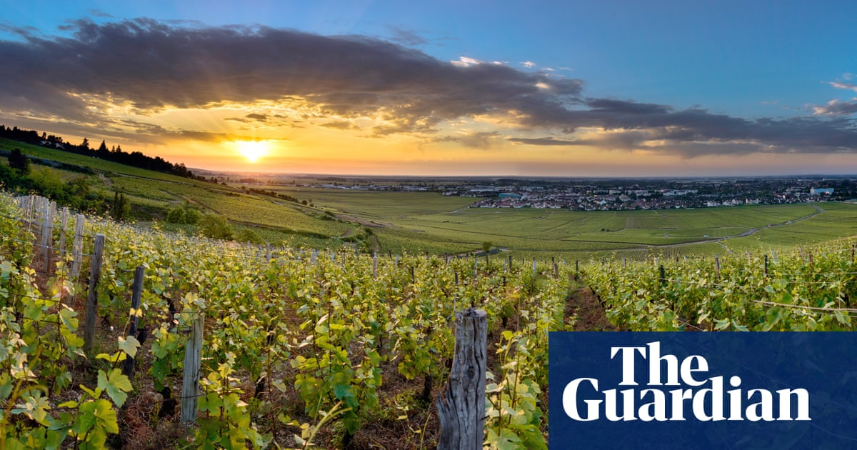 Can burgundy on a budget ever hit the spot? | Fiona Beckett on wine