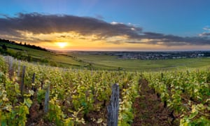 Growing pains: it has been a tough time for vineyards as hail and frost have taken their toll.