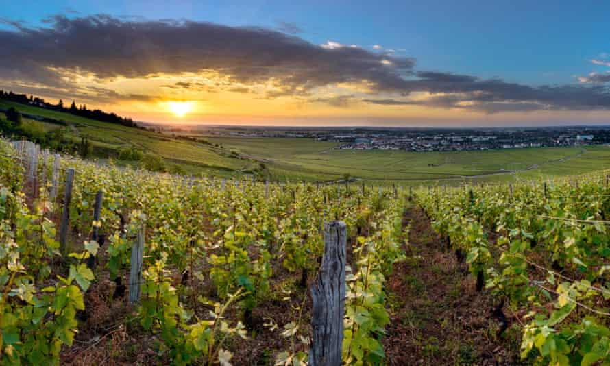 Sparkling future: the Burgundy region produces great fizzy white wines as well the more famous reds.