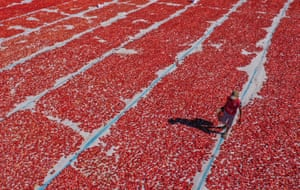 Izmir, Turkey: A drone photo shows tomatoes being dried in the sun