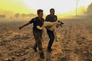 Emergency workers rescue a dog from a forest fire in Mugla province, Turkey