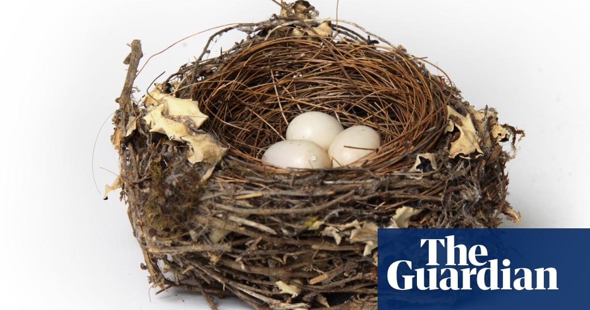 Helen Macdonald The Forbidden Wonder Of Birds Nests And Eggs