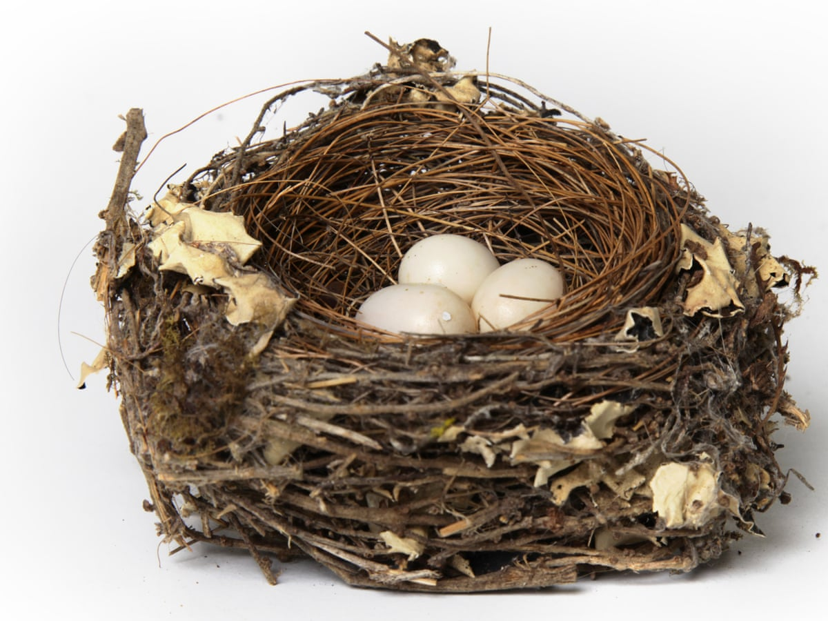 Helen Macdonald The Forbidden Wonder Of Birds Nests And Eggs Science And Nature Books The Guardian