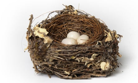 A bird's nest containing three eggs