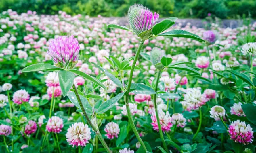 Alsike clover is good for wet, acidic soil.