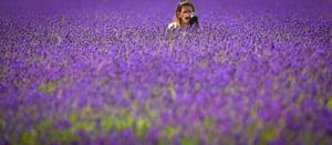 Mayfield Lavender Fields by Simon Adams.