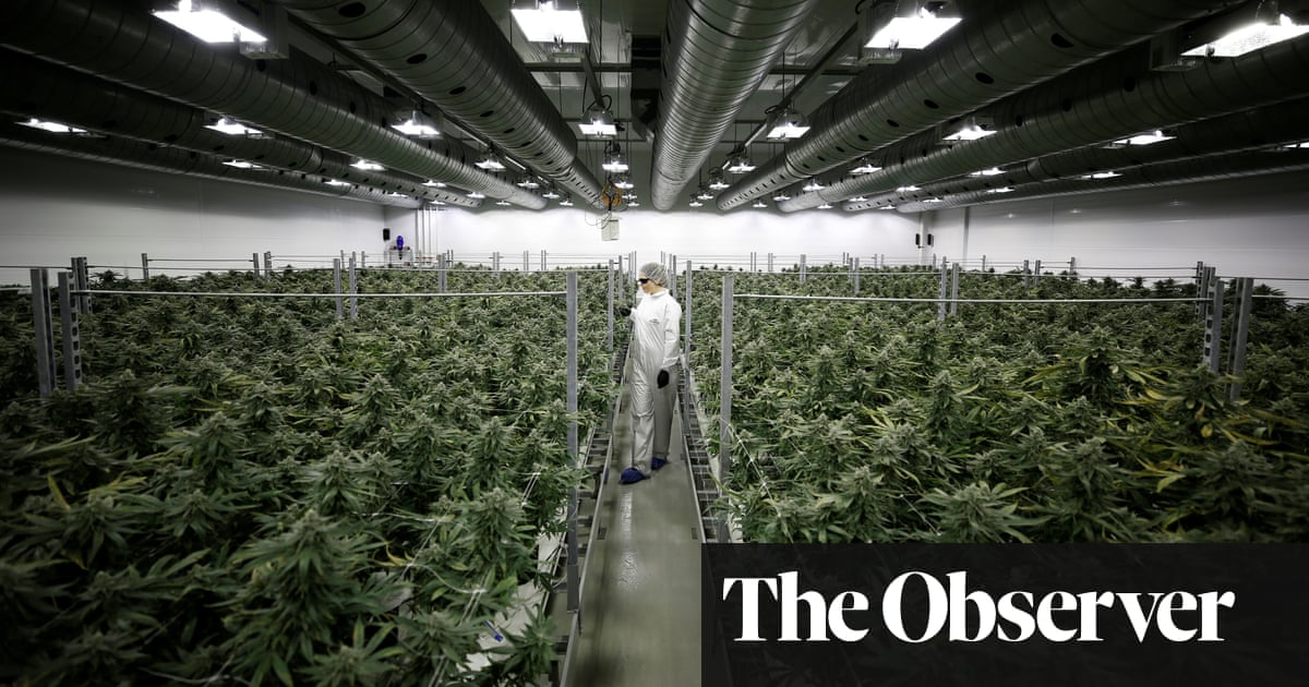 post-image-'There's no opposition now': how a quiet Canada town became a world leader in growing weed