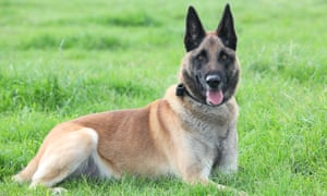 Mali has been recognised for his heroic actions in 2012, when he assisted an assault force in securing a key Taliban stronghold.