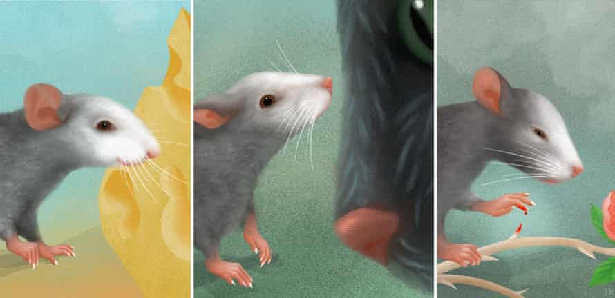 Mice facial expressions and emotions