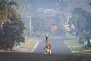 A kangaroo on an empty street in Tathra following a bushfire on the NSW south coast on Tuesday