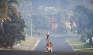 Tathra, on the south coast of NSW, was evacuated in response to encroaching flames in March this year.