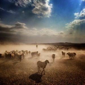 Shepherd and his sheep, south-east Iran, 2014.