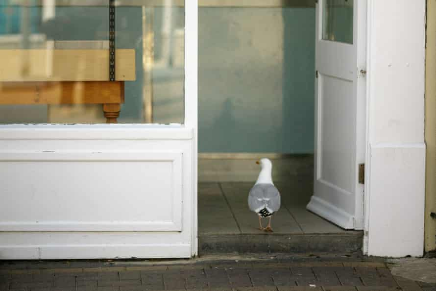 A gull pops in for chips in Burnham-on-Sea.