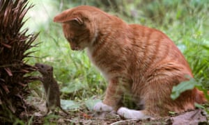 A cat plays with a mouse in a garden in Wuhan, Hubei province, October 28, 2008.  RETUERS/Stringer (CHINA).  CHINA OUT. NO COMMERCIAL OR EDITORIAL SALES IN CHINA.