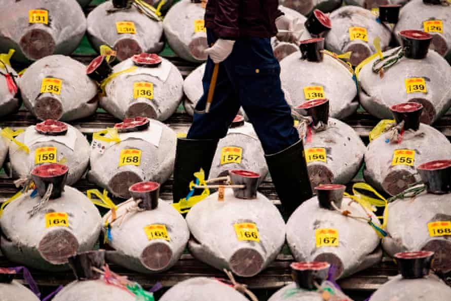 A wholesaler walks along the lined up frozen tuna ahead of the New Year's auction at Toyosu fish market in Tokyo, Japan on January 5, 2021. (Photo by Philip FONG / AFP) (Photo by PHILIP FONG/AFP via Getty Images)