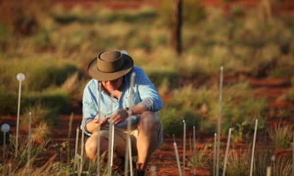 Bruce Munro works on the installation Field of Light Uluru, Australia. March 2016.