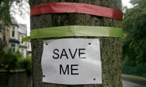 Trees in Sheffield that are under threat