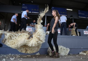 Edinburgh, UKSheep wool tossed in the air during a young farmers sheep shearing competition at the the Royal Highland Show
