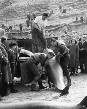 Boy watches as men load dead whales on to truck