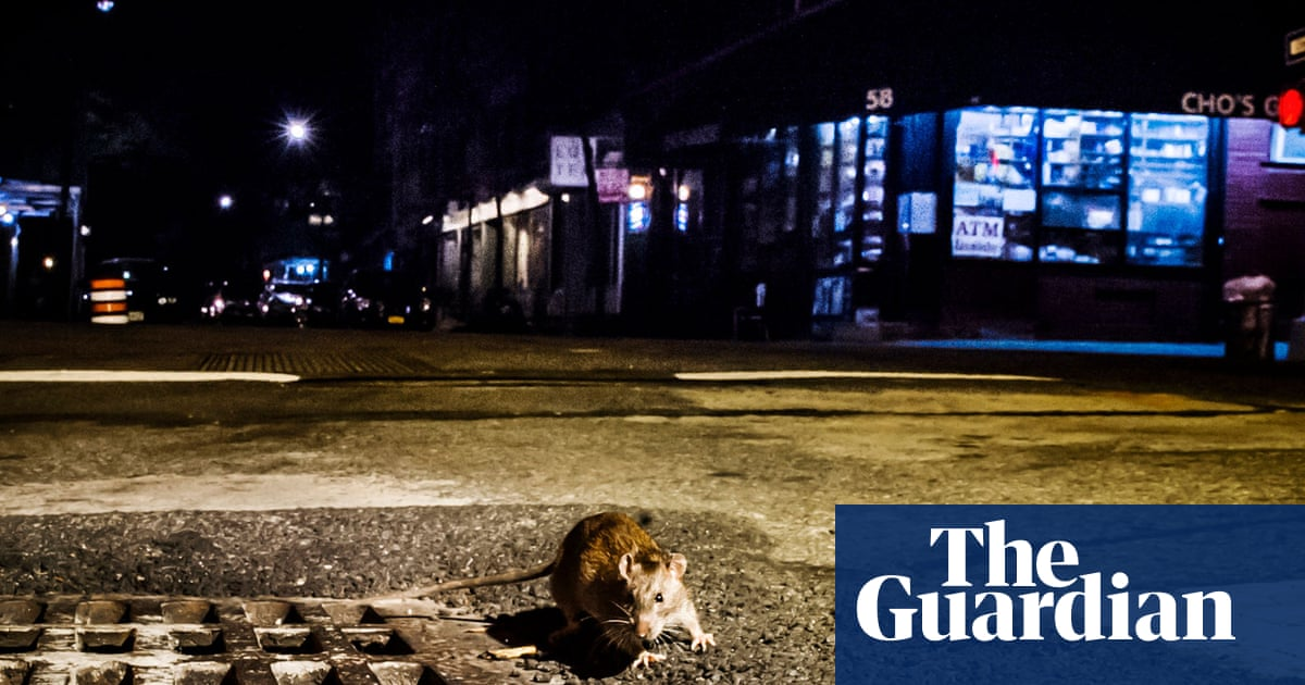 We are at war': New York's rat crisis made worse by climate