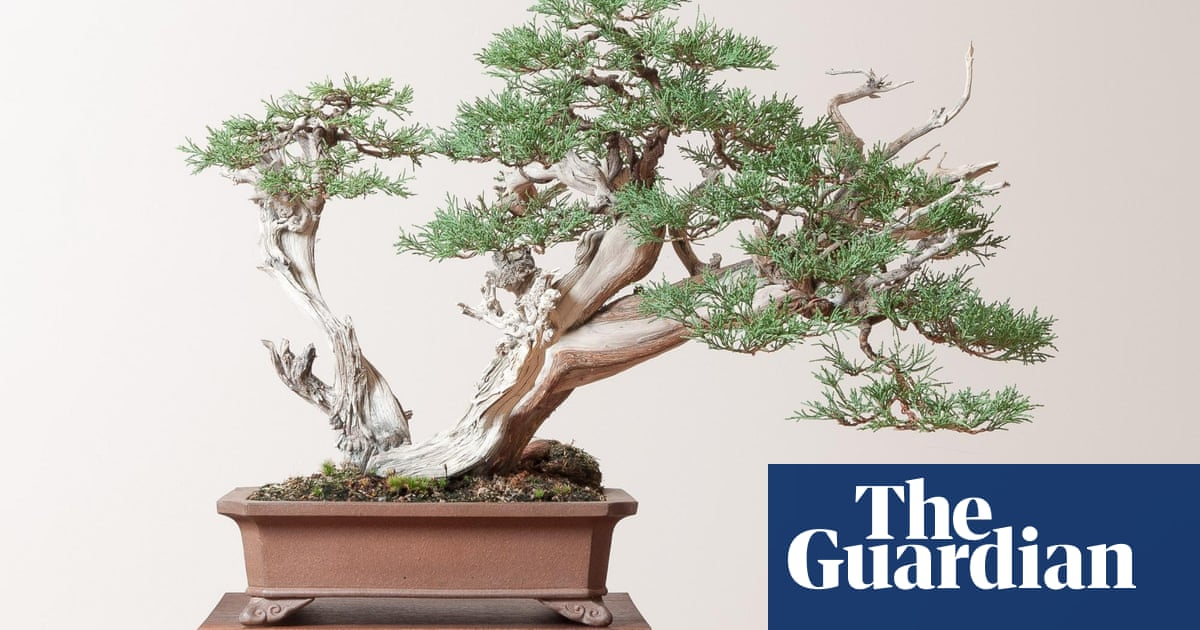 Learning To Grow The American Bonsai Master Who Starved For Knowledge Gardens The Guardian