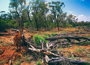 Land clearing in southwestern Queensland, Australia