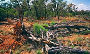 Broadacre clearing in Queensland.