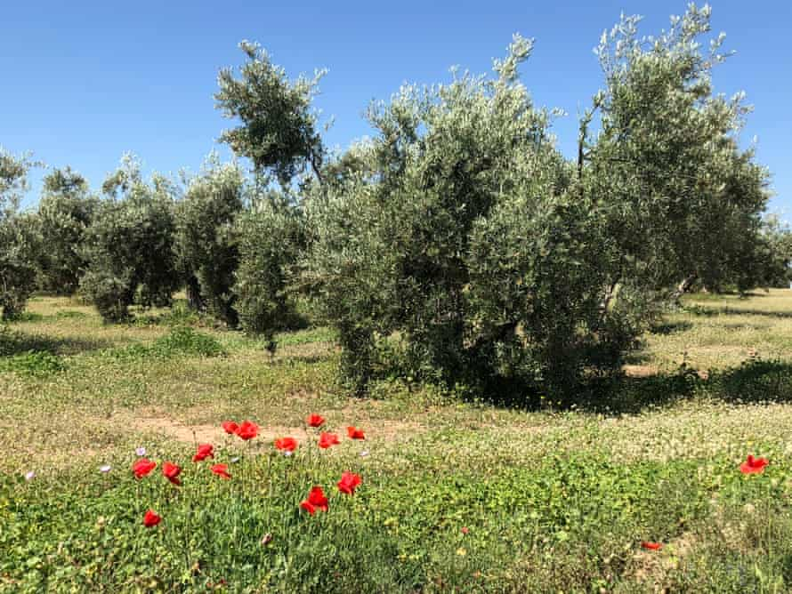 Olive grove in the Sierra Magina in Jaen, southern Spain