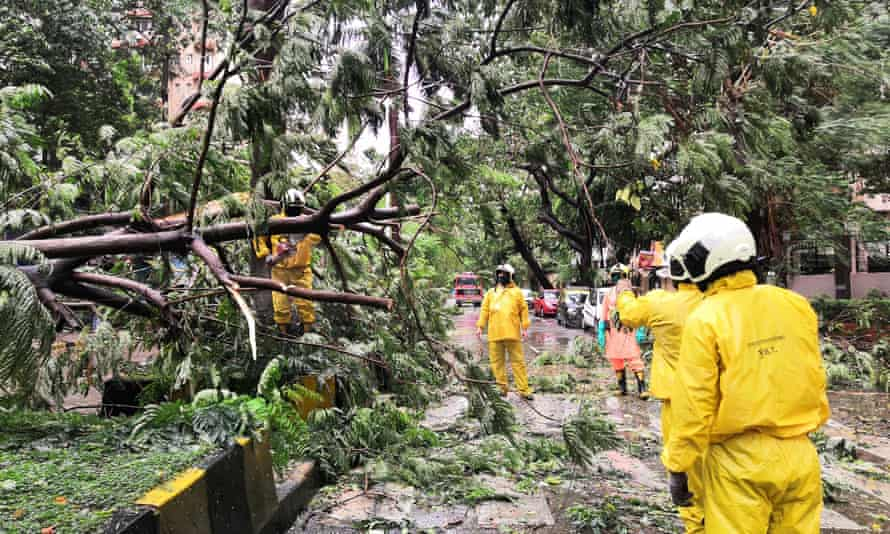 Municipal workers stand by a damaged tree in the Cuffe Parade area of Mumbai, India