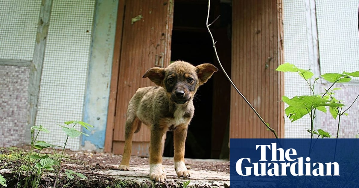 Meet the dogs of Chernobyl – the abandoned pets that formed their