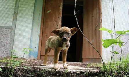 Abandoned dogs at Chernobyl