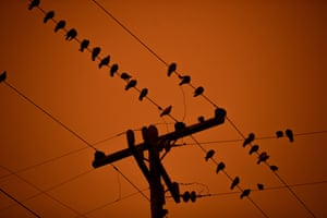 A flock of birds rest on power lines as smoky skies from the northern California wildfires casts a reddish color during the morning in Oakland, Calif., on Wednesday, Sept. 9, 2020.