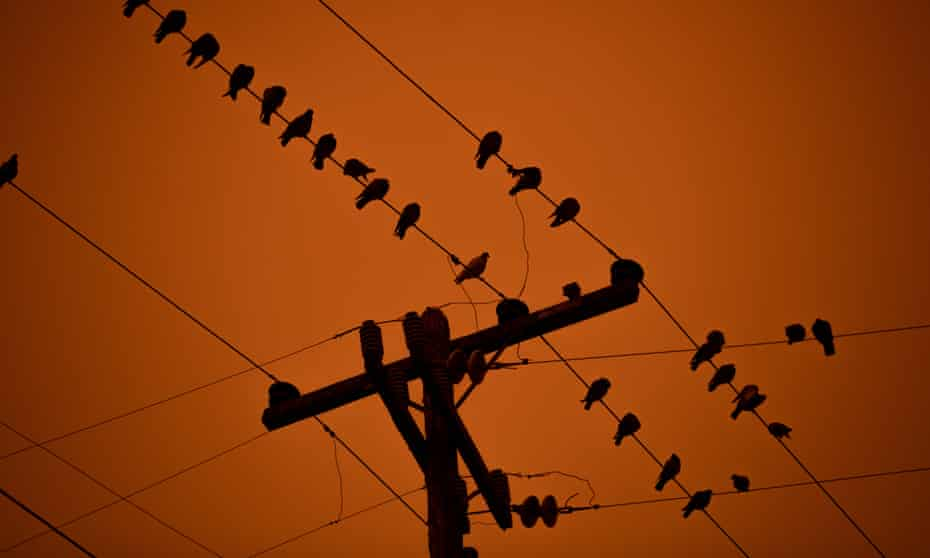 A flock of birds in Oakland, California, where smoke from wildfires turned the sky blood orange this autumn.