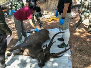 Vets prepare to examine a dead deer at Khun Sathan National Park in Nan province, Thailand. The animal was found dead after swallowing 7kg of plastic bags and other rubbish.