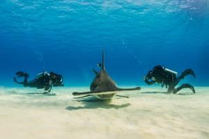Shark Bytes photograph