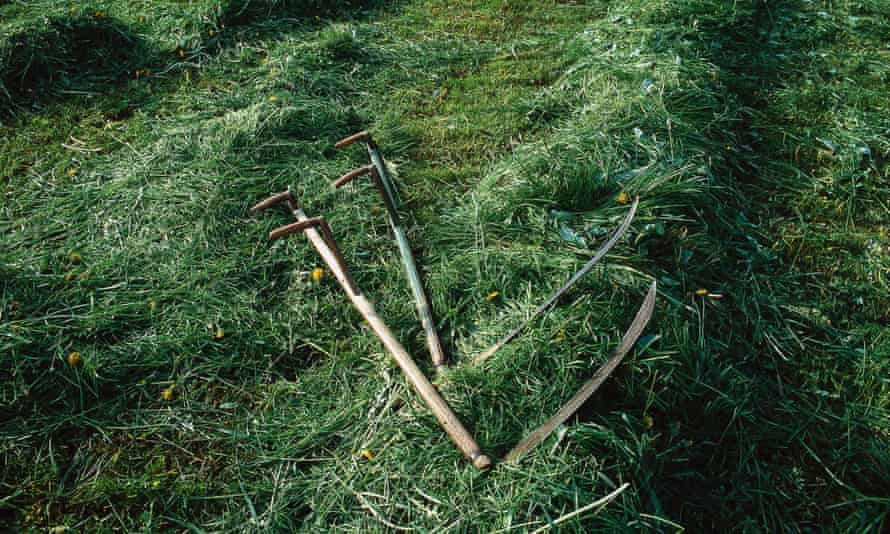 Austrian scythes on a fresh mown meadow