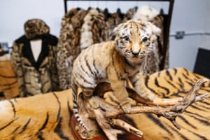 Scotland Yard's small wildlife unit on Lambeth Road in London, which has opened its store of raided treasures for the first time