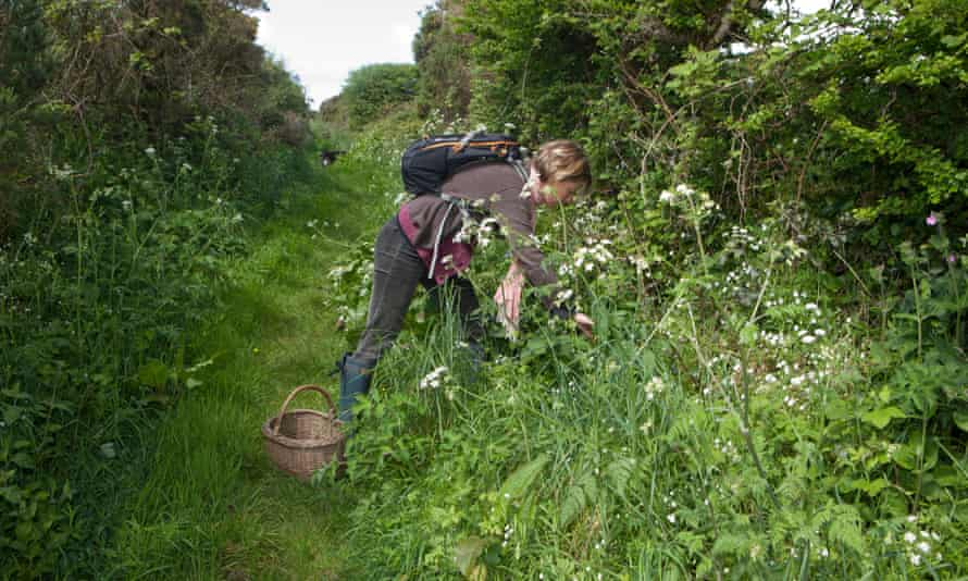 The Fat Hen's Caroline Davey, who teaches food foraging in Cornwall.