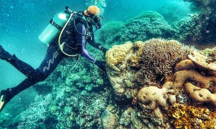 A diver examines coral